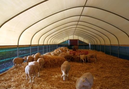 Как открыть ферму по выращиванию баранов 13